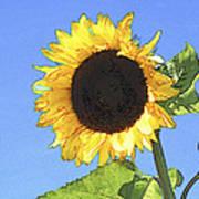Basking In The Sunlight Poster