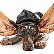 Basset Hound Dog Aviator Poster