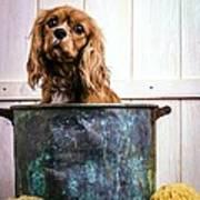 Bath Time - King Charles Spaniel Poster by Edward Fielding