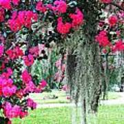 Baton Rouge Louisiana Crepe Myrtle And Moss At Capitol Park Poster