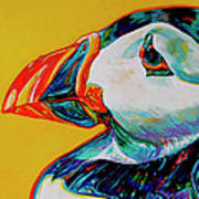 Bay Bulls Puffin Poster