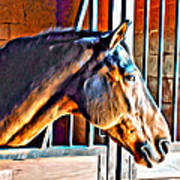 Bay In Stall Poster