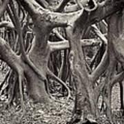 Baynan Roots Poster