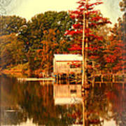 Bayou Scenery Poster