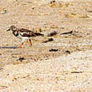 Beach Bird 2 Poster