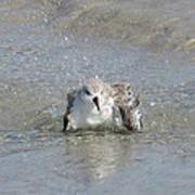 Beach Bird Bath 2 Poster