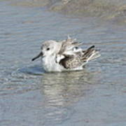 Beach Bird Bath 4 Poster