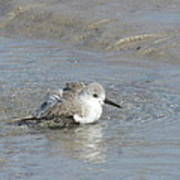 Beach Bird Bath 5 Poster