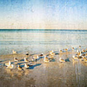 Beach Combers - Seagull Art By Sharon Cummings Poster by Sharon Cummings