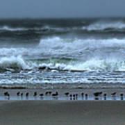 Beach Feast - Outer Banks Ocracoke Poster by Dan Carmichael