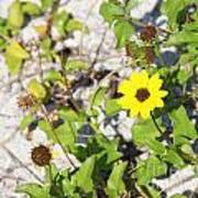 Beach Flower Poster