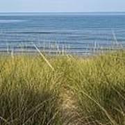 Beach Grass Poster