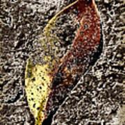 Beach Leaf Poster