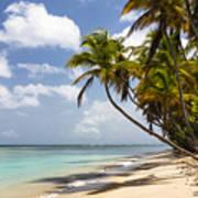 Beach Pigeon Point Tobago West Indies Poster