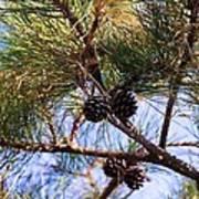 Beach Pine Poster