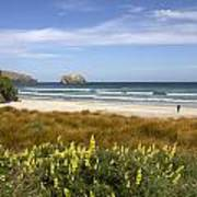 Beach Scene Otago Peninsula South Island New Zealand Poster