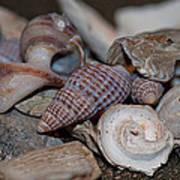 Beach Shells 3 Poster