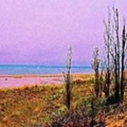 Beach Trees Poster
