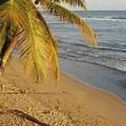 Beach Under Golden Palm Poster