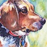 Beagle Dog Poster
