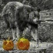 Bear And Pumpkins Poster