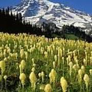 Bear Grass At Mt. Rainier - V Poster