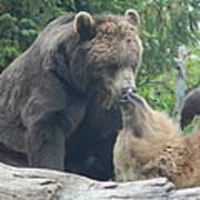Bear Kisses Poster