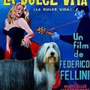 Bearded Collie Art Canvas Print - La Dolce Vita Movie Poster Poster