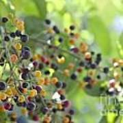 Bearing Good Fruit Poster