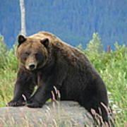 Bearly Posing Poster