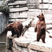 Bears Feeding Time At The Zoo II Poster