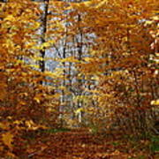 Beautiful Autumn Sanctuary Poster