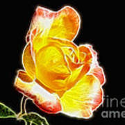 Beautiful Blooming Yellow Rose Poster