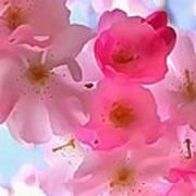 Beautiful Blooms Poster