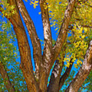 Beautiful Blue Sky Autumn Day Poster