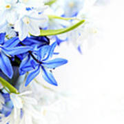 Beautiful Blue White Flower Poster