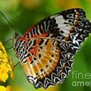 Leopard Lacewing Poster