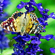 Beautiful Butterfly On A Flower Poster