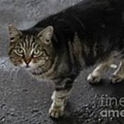 Beautiful Cat Poster