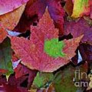 Beautiful Colors Of Fall Poster