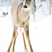 Beautiful Deer Poster