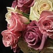 Beautiful Dramatic Roses Poster