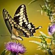 Beautiful Golden Swallowtail Poster
