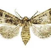 Beautiful Gothic Moth Poster