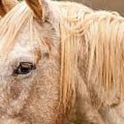 Beautiful Gray Horse Portrait Poster