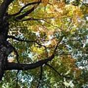 Beautiful Leaf Blanket Poster