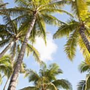 Beautiful Palms Poster