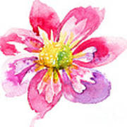 Beautiful Pink Flower Poster