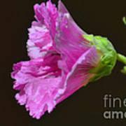 Beautiful Purple Flower Poster