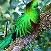 Beautiful Quetzal 2 Poster